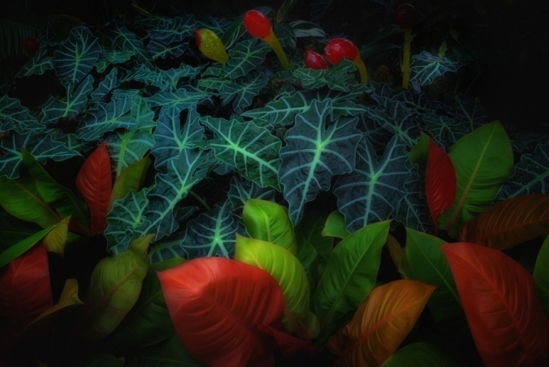 Lucious Leaves by Lamar Phillips