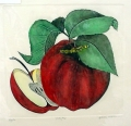 Apple watercolor etching by Dan Mitra