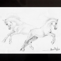 horses-mustangs-drawing-Mahmood-Hayat