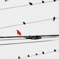 Birds on a Wire - Sara Abbott